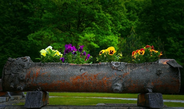 flowers in a hollow log DIY project