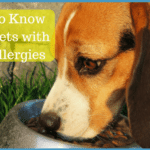 What to Know About Pet Food Allergies