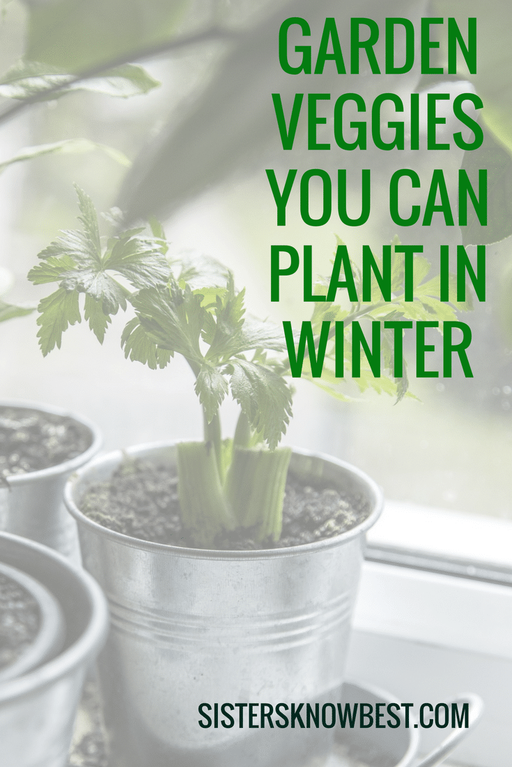start winter veggies inside to get early start on spring!