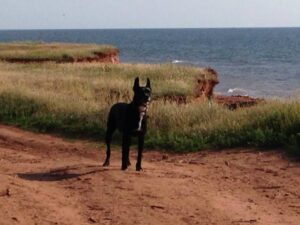 Robbie on the ocean shore along Anglo Tignish, Prince Edward Island