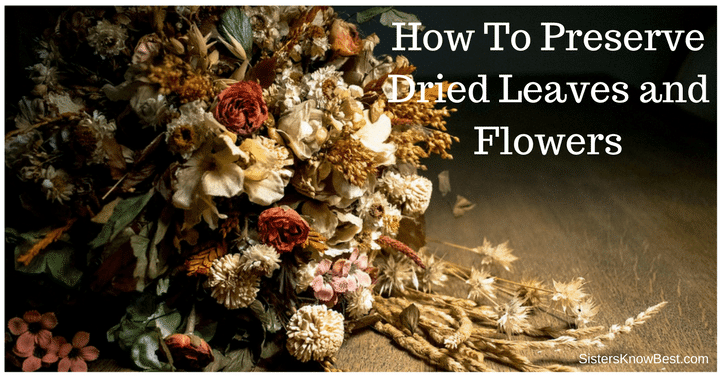 How To Preserve Dried Leaves and Flowers by Sisters Know Best