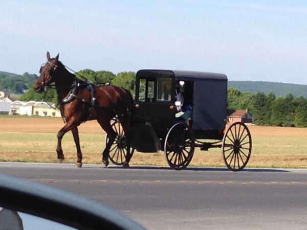 Amish Country Buggy