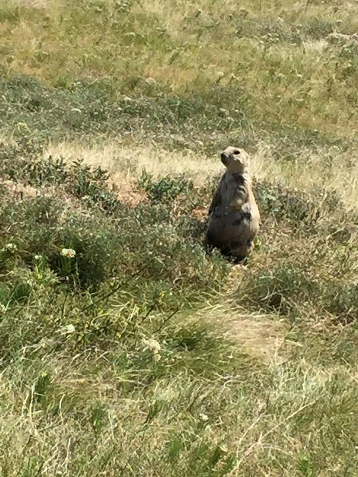 Prairie Dog at the base of Devil's Tower