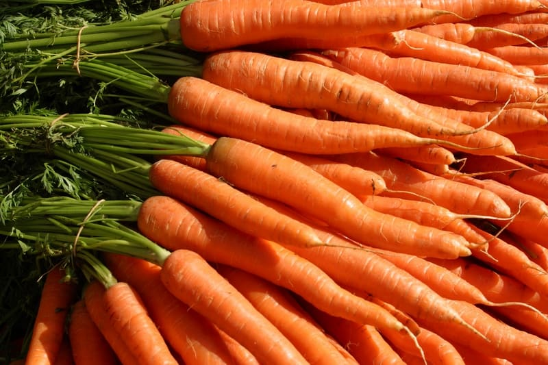 preserve garden vegetables - Carrot harvest