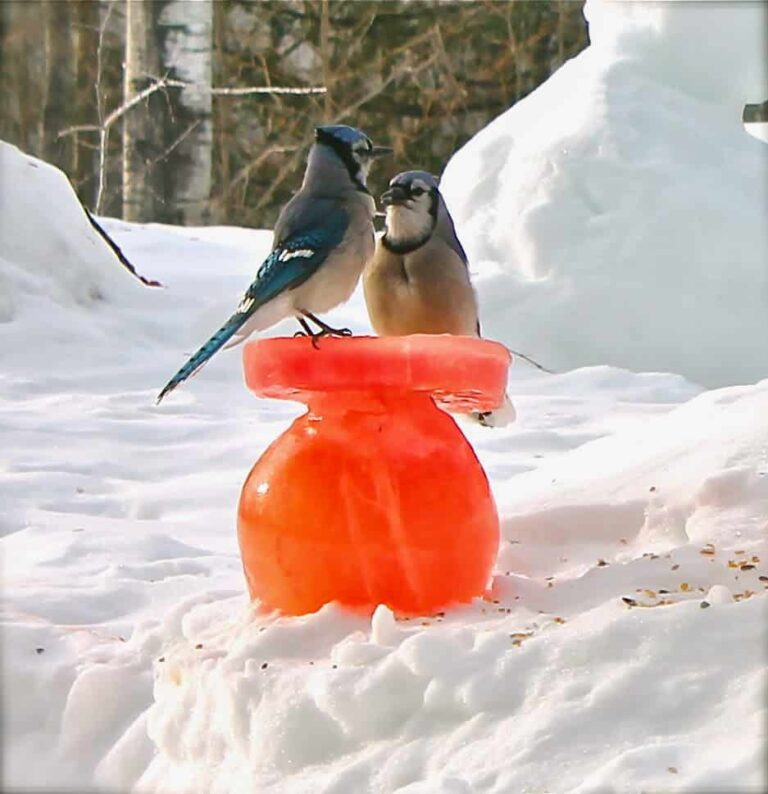 DIY Winter Bird Feeder Project from Twigs and Toadstool