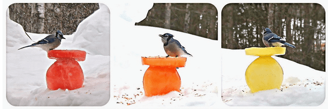 Ice Bird Feeder